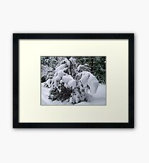 Snow Load Framed Print
