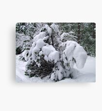Snow Load Metal Print