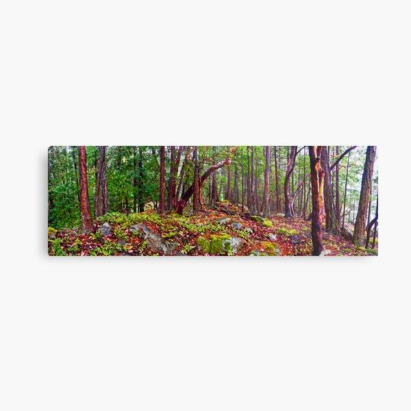 Gulf Islands Woods in the Fall - Panorama Metal Print