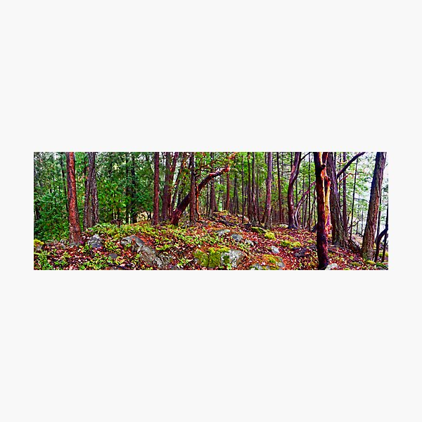 Gulf Islands Woods in the Fall - Panorama Photographic Print