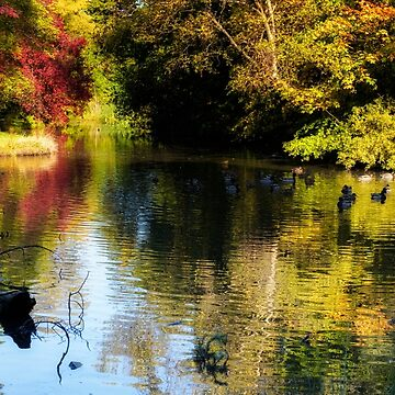 The pond at Inglewood House by 242Digital