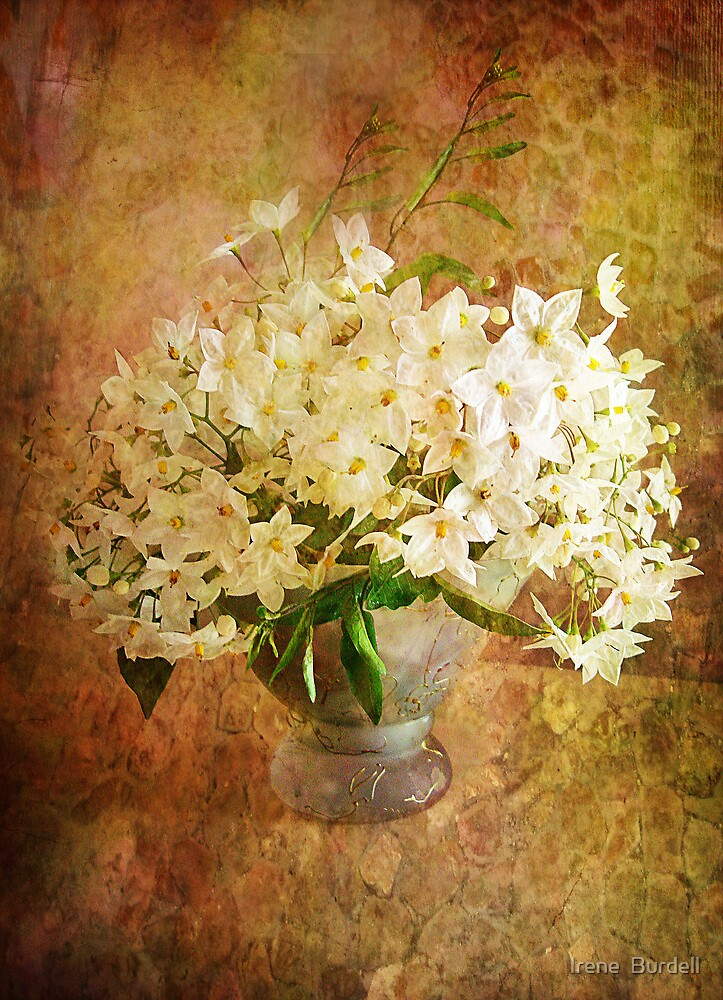 Jasmine in a Vase  by Irene  Burdell