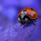 Purple Lady by Yool