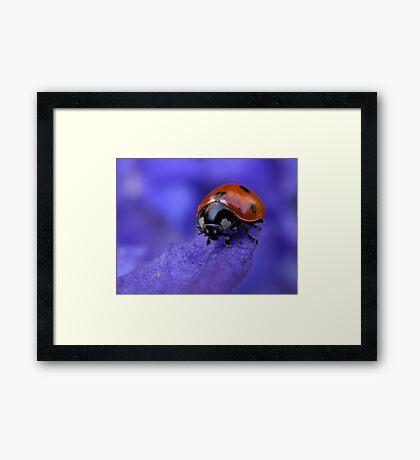 Purple Lady Framed Print