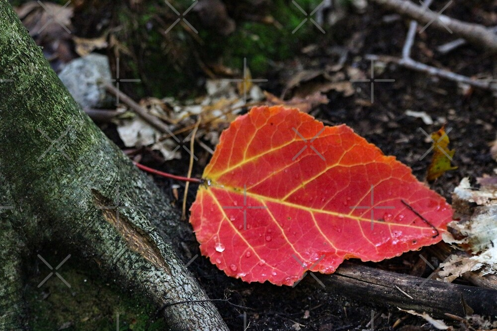 Fall solitaire by debfaraday