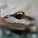 A Frogs Eye by toby snelgrove  IPA