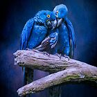 When I'm feeling Blue by Tarrby