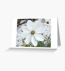 cosmea Greeting Card