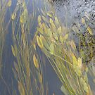 Plants Under Water in the River by MaeBelle