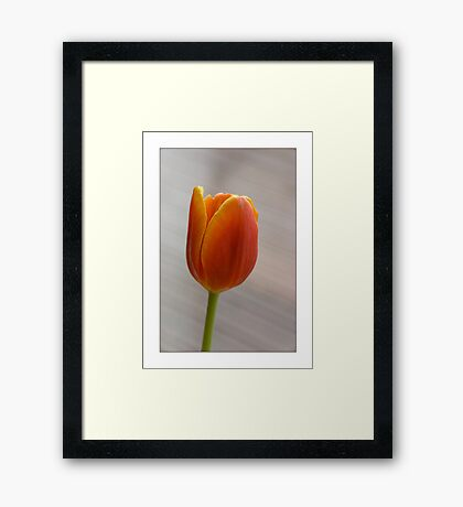 Tulip 101 Framed Print