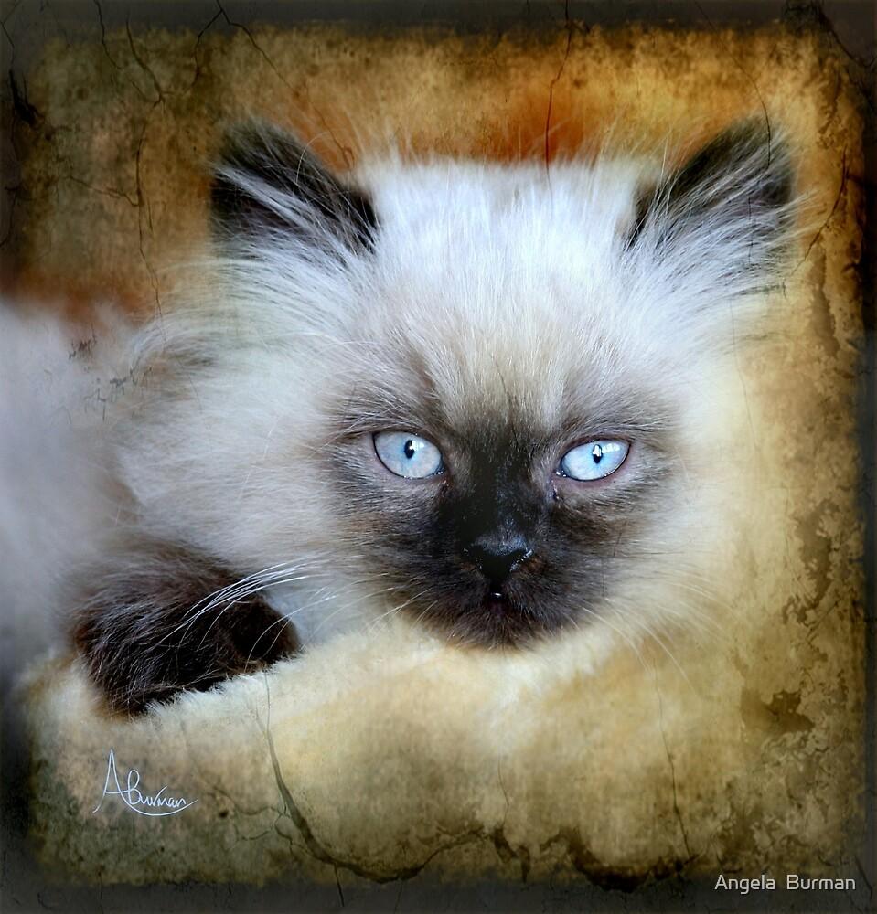 Little Blue Eyes by Angela  Burman