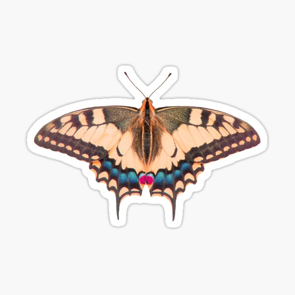 ColorFly Sticker