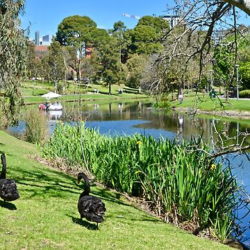 River Torrens - Adelaide by ianb7