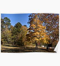 Autumn Beauty in Light and Shadows Poster