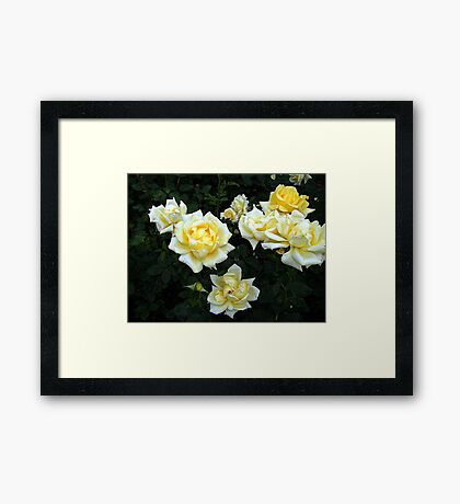 Berolina Rose Framed Print