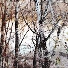 Birch Wood Abstract by Alexandra Lavizzari