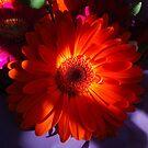 Gerberas.  Orange Treat. by Lozzar Flowers & Art