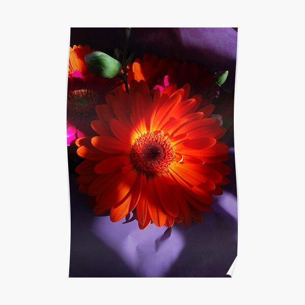 Gerberas.  Orange Treat. Poster
