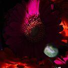 Gerberas. Glowing warmth. by Lozzar Flowers & Art