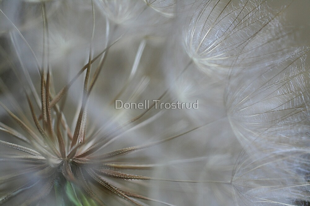 The Inside Story by Donell Trostrud