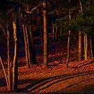 evening glow by kathy s gillentine