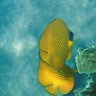 The Masked Butterflyfish Turquoise by hurmerinta