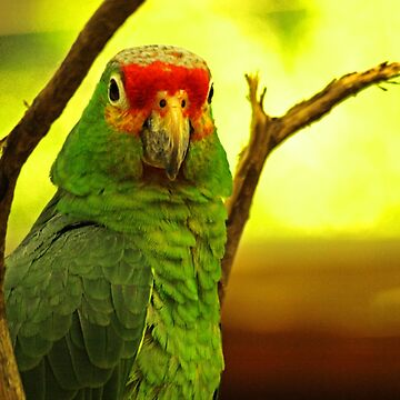 Portrait of a Parrot by guytsch