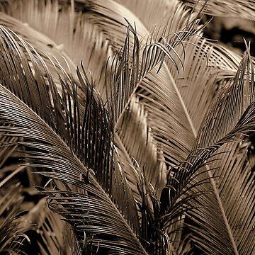 palms by jweekley
