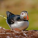 The Puffin Loo by peaky40