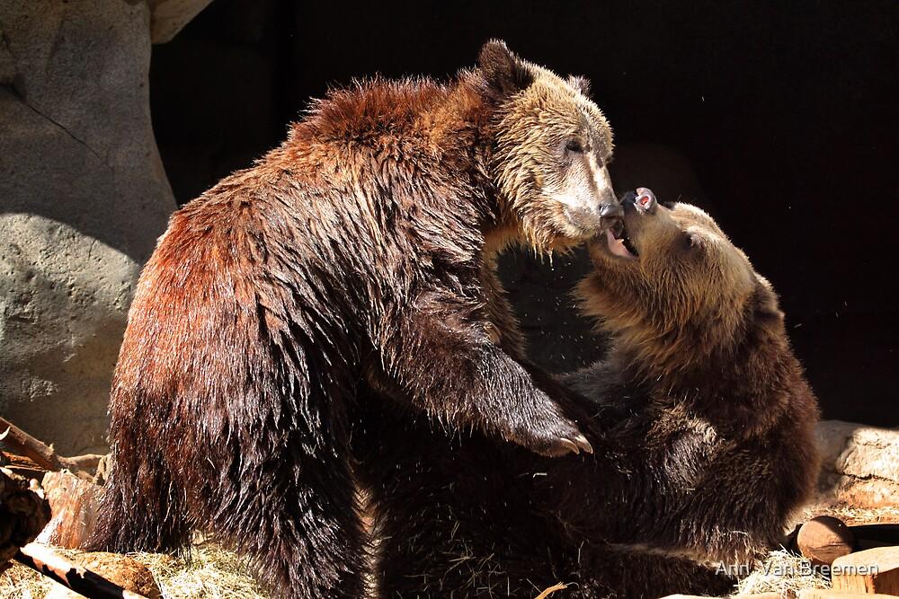 Grizzly Bear Wrestling Match by Ann  Van Breemen