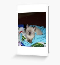 Siamese Kitty Greeting Card