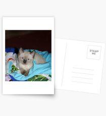 Siamese Kitty Postcards