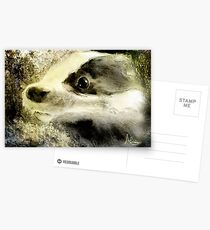 Baby Badger Postcards