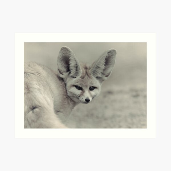 Stolen Glance Art Print