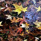 Autumn by KatarinaSilva