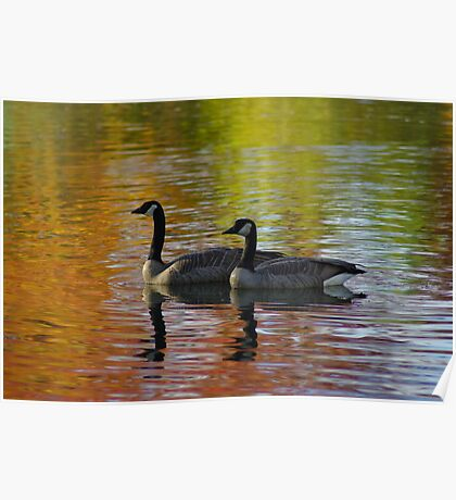 Canada Geese - Kathryn Albertson Park Poster