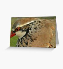 Red Legged Partridge Greeting Card