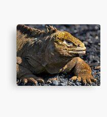 Galapagos Land Iguana Canvas Print
