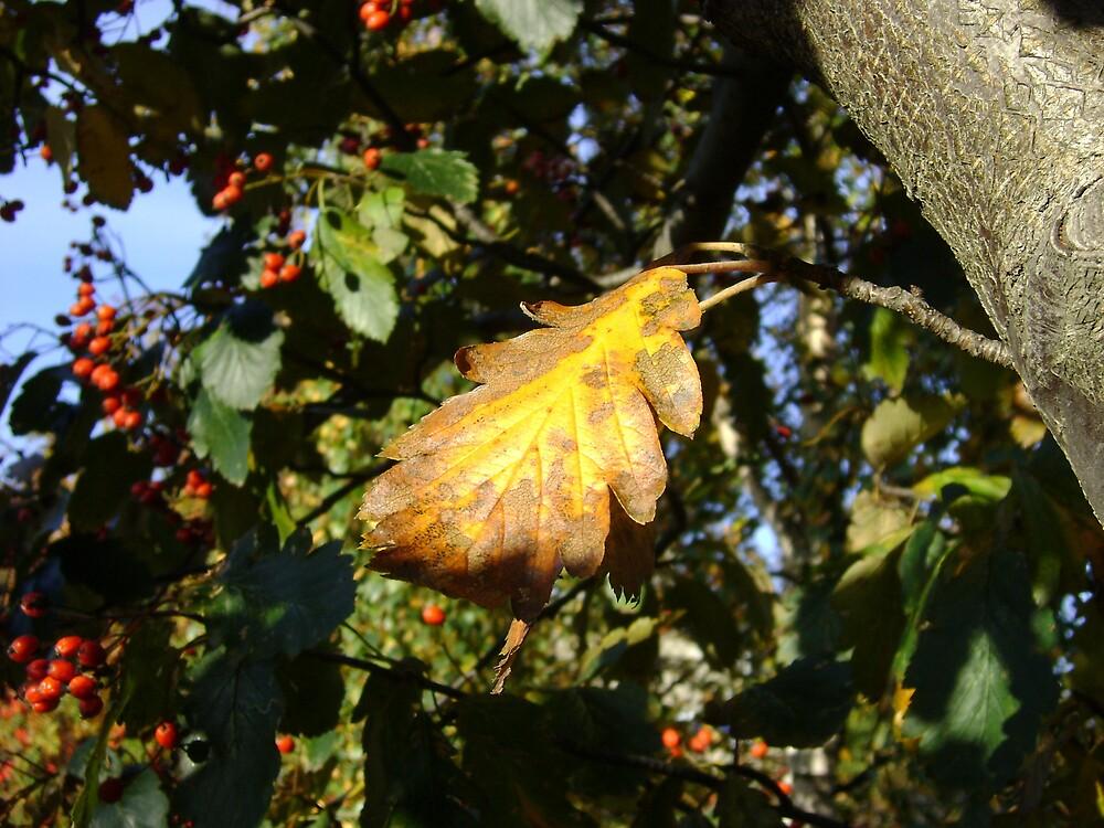 Autumn - yellow leaf, Burntisland 2009 by armadillozenith