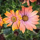 Orange Flowers by Sunil Bhardwaj
