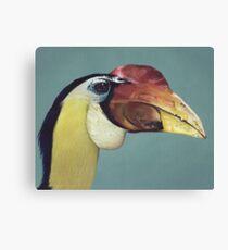 Wrinkled Hornbill Canvas Print