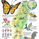 US National Pollinator Highway Map - I-35 by Chuck Whelon
