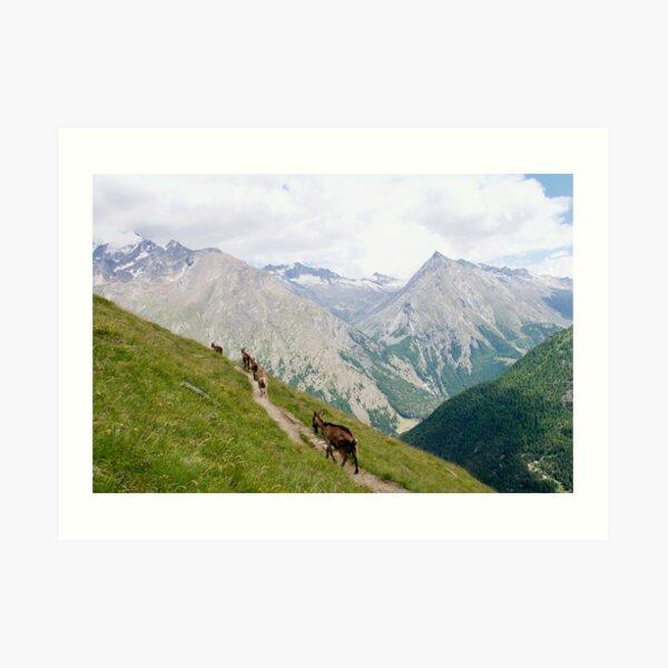 The Goats of Saas-Fee Art Print