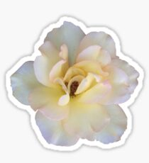Pale Multi-colored Rose Sticker
