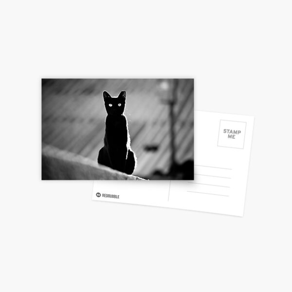place in the sun for a black cat Postcard