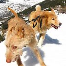Snow stompin' in the alpujarras, Spain by Fin Gypsy