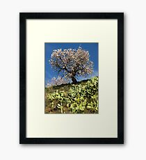 Almonds in the Alpujarras, Spain Framed Print