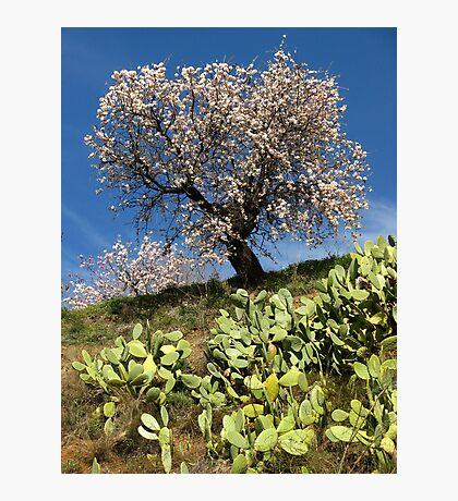 Almonds in the Alpujarras, Spain Photographic Print