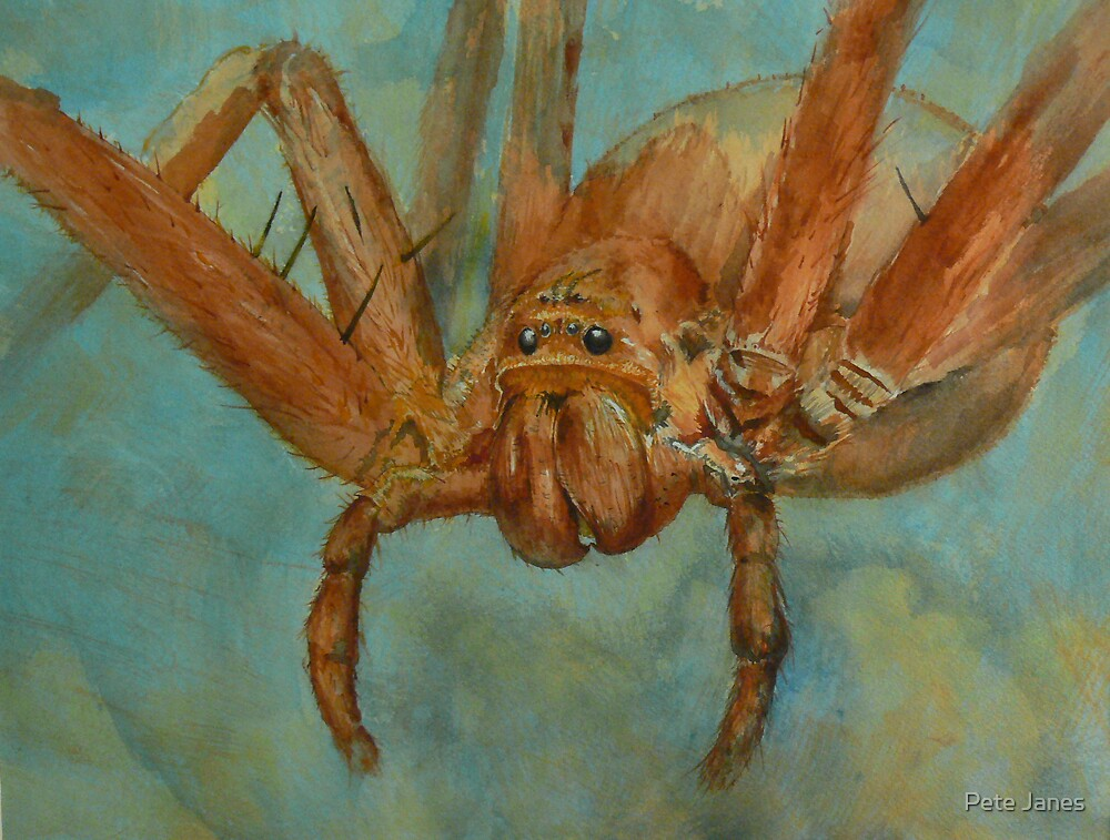 Fido Hawaiian Cane Spider By Pete Janes Redbubble