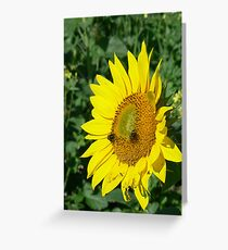 Fabulous Sunflower Greeting Card